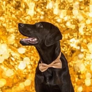 Hund029