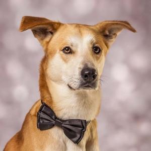 Hund033