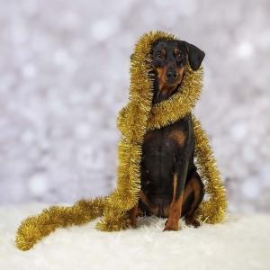 Hund032