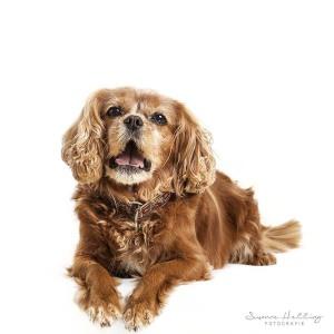 Hundefotografie Susannehelling