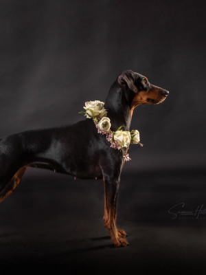 Susanne Helling Fotografie Hundefotografie