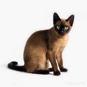 Katzenfotografie Susannehelling